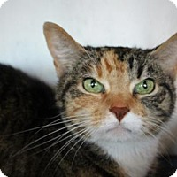Adopt A Pet :: Tisk Tisk - West Des Moines, IA