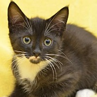 Adopt A Pet :: George170601 - Atlanta, GA