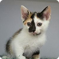 Adopt A Pet :: June Bug - Nashville, TN