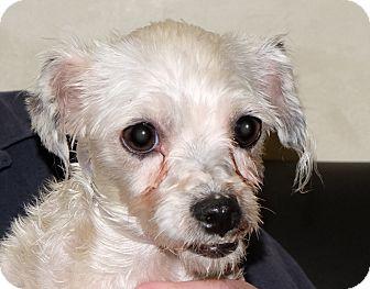 Poodle (Miniature) Mix Dog for adoption in Spokane, Washington - Ariel