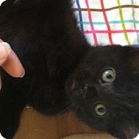 Adopt A Pet :: Drew - Novato, CA