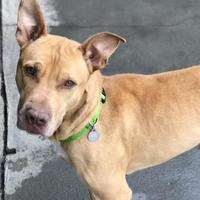 Adopt A Pet :: Rusty - The Dalles, OR