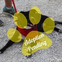 Adopt A Pet :: Queenie - DeSoto, IA