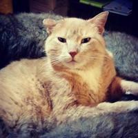 Adopt A Pet :: Gigi - Spruce Grove, AB