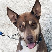 Adopt A Pet :: Ken - Palmdale, CA
