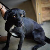 Adopt A Pet :: Tori - Starkville, MS