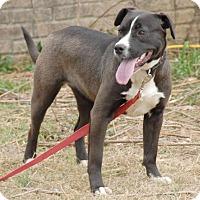 Adopt A Pet :: Bonnie - Shelbyville, TN