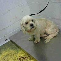 Adopt A Pet :: LETHA - Atlanta, GA