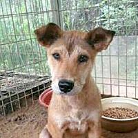 Adopt A Pet :: Jennifer - LONG ISLAND CITY, NY