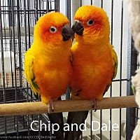 Adopt A Pet :: Chip & Dale - Villa Park, IL