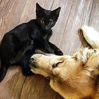 Adopt A Pet :: William - College Station, TX