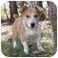 Photo 3 - Dachshund/Corgi Mix Dog for adoption in Mocksville, North Carolina - Tater