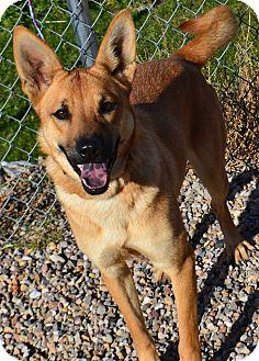 German Shepherd Dog Mix Puppy for adoption in Fruit Heights, Utah - Josie