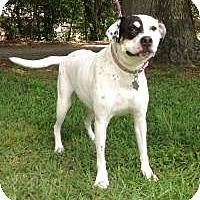 Boxer Mix Dog for adoption in Kingwood, Texas - Piper