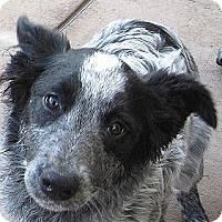 Adopt A Pet :: Baby Katie - Oakley, CA