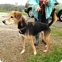 Adopt A Pet :: # 134-14  RESCUED! - Zanesville, OH