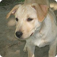 Adopt A Pet :: Fajita - Portland, ME