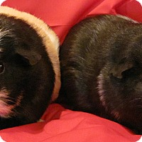 Adopt A Pet :: Charlie and Sara - Williston, FL