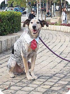Collie Mix Dog for adoption in Castro Valley, California - Milo
