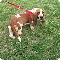 Adopt A Pet :: Daisy - Hazard, KY