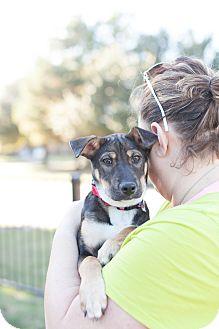 German Shepherd Dog/Hound (Unknown Type) Mix Puppy for adoption in Calgary, Alberta - Bluebelle