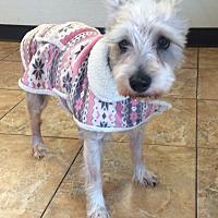 Adopt A Pet :: Greta - Oak Ridge, NJ
