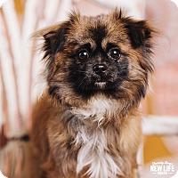 Adopt A Pet :: Noah - Portland, OR