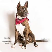 Adopt A Pet :: KENNEL 30 - Corona, CA