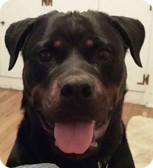 Rottweiler Mix Dog for adoption in Frederick, Pennsylvania - Madame Belfry