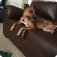 Adopt A Pet :: Mary Miley - Citrus Heights, CA