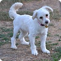 Adopt A Pet :: Bubbles - Simi Valley, CA