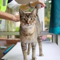 Adopt A Pet :: Relish - Wausau, WI