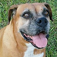 Adopt A Pet :: **SYDNEY** MEET SEPT 23RD! TX DOG! - Mukwonago, WI