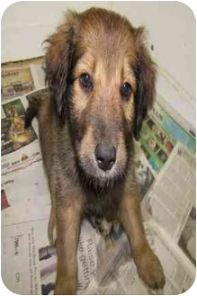 Border Collie Mix Puppy for adoption in Morden, Manitoba - Doc