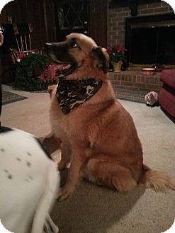 German Shepherd Dog Mix Dog for adoption in Burlington, New Jersey - Bentley
