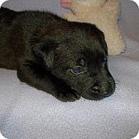 Adopt A Pet :: ACE - Shirley, NY