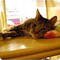 Adopt A Pet :: Morgan - Modesto, CA