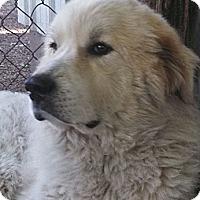 Adopt A Pet :: Georgie - Cambridge, IL