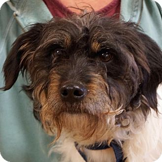 Terrier (Unknown Type, Small) Mix Dog for adoption in Sprakers, New York - Nuggie