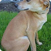 Adopt A Pet :: Anya - Danbury, CT