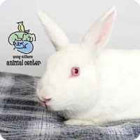 Adopt A Pet :: Snow White - Knoxville, TN
