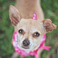 Adopt A Pet :: Izzy - Kingwood, TX