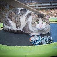 Adopt A Pet :: Thor - Corinne, UT