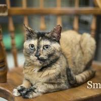 Adopt A Pet :: Smash - West Des Moines, IA