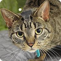 Adopt A Pet :: Sadie - Huntley, IL