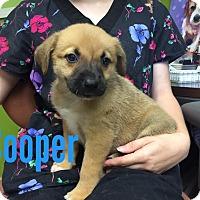Adopt A Pet :: Cooper- ADOPTION PENDING - Joplin, MO