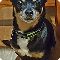 Adopt A Pet :: Kissie - Andalusia, PA