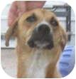 Terrier (Unknown Type, Medium)/Labrador Retriever Mix Dog for adoption in Poway, California - Lucy