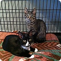 Adopt A Pet :: Sammy & Scooter - Mount Clemens, MI
