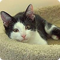 Adopt A Pet :: Panda - Victor, NY
